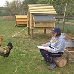 Student counting chickens at Laineys Farm