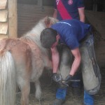 Shoeing a pony at Laineys Farm, a centre for disabled adults near Staplehurst, Kent